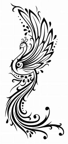 1000+ images about PEACOCK line drawings on Pinterest