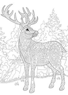 1000+ images about Animal Coloring Pages for Adults on