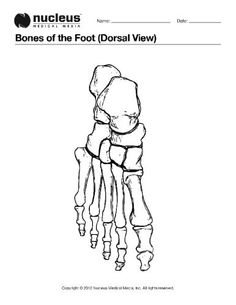 Anatomy, Coloring pages and Bone jewelry on Pinterest
