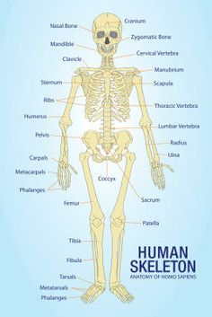 know the name of every bone in the human body   Inspiring