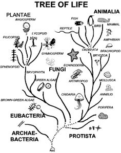 Moss Life Cycle | Plant Diversity I