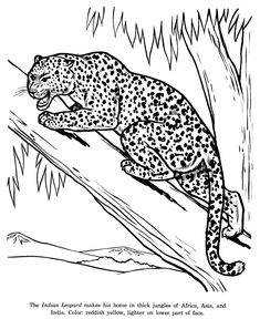 Wild animals, Coloring pages and Animal coloring pages on