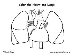 Human Heart coloring page with coded numbers for making