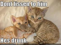 Super Cute Baby Cat Drinking Bottle Wallpaper 1000 Images About Drunk Cats On Pinterest Drunk Cat