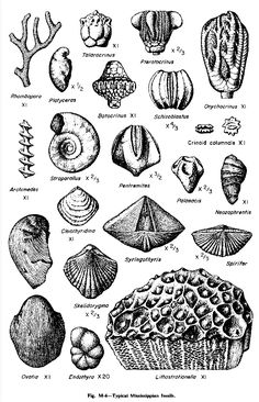 1000+ images about invertebrate fossil study on Pinterest