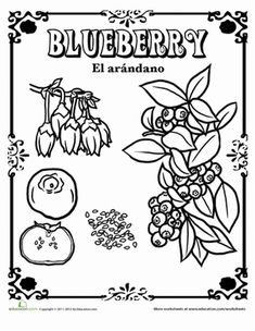 BLUEBERRIES FOR SAL--Coloring Page: Blueberries. My older