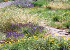 California Native Garden Inspiration Garden Ideas Pinterest