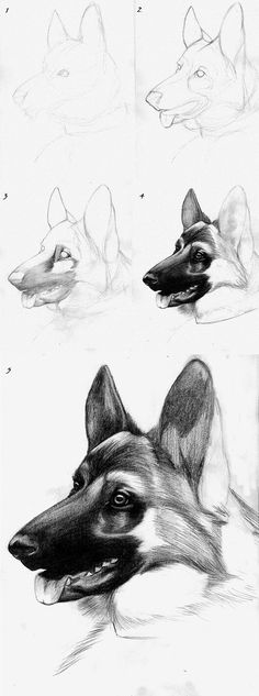 How to Draw a Howling Wolf For Kids, Step by Step, Animals