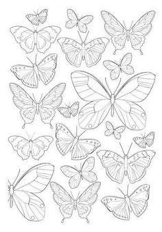 Adult coloring pages, Adult coloring and Insects on Pinterest