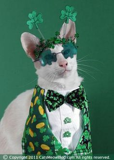 Cute Wallpaper St Pattys Day Pupppy 1000 Images About St Patrick S Day Pets On Pinterest
