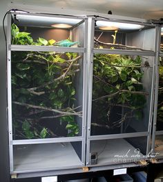 Naturalistic Adult Chameleon Cage Setup  Reptile Stuff