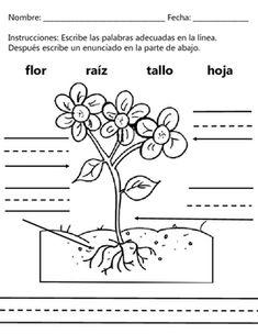 Seed Dispersal Diagram Seed Packet Lettuce Wiring Diagram