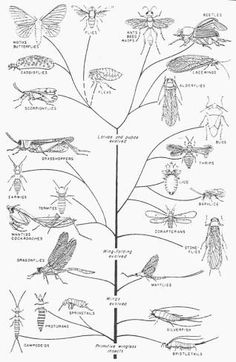 Here we have simply stated out Arthropods Facts and Facts