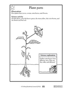 A Kindergarten Reading Comprehension Worksheet about