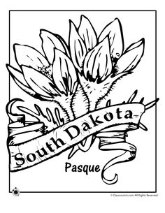 Flower coloring pages, Coloring pages and Arizona on Pinterest