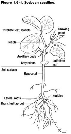 1000+ images about Plant Systems on Pinterest