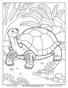 Printable turtle coloring page. Free PDF download at http