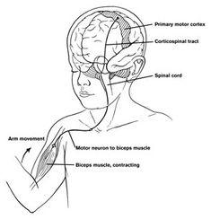 1000+ images about TOPICS: Vestibular System on Pinterest