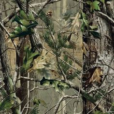 Realtree Ap Wallpaper For Iphone 1000 Images About Awsome On Pinterest Background Images