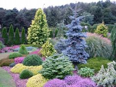 Let's Talk About Landscape Design With Conifers Outdoors