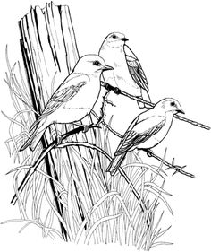 64. Realistic and detailed kingfisher bird coloring pages