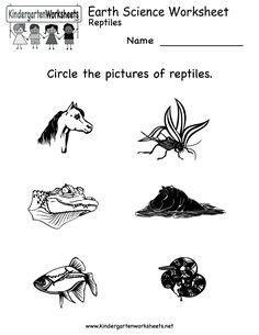 1000+ images about Science Worksheets and More! on