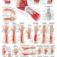 Bones Human Skeleton Diagram Back 2004 Chevy Venture Power Window Wiring 1000+ Images About The Muscular System On Pinterest | Muscle, Anatomy And Leg