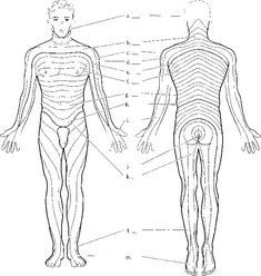 1000+ images about WESTER PHYS EXAM ABDOMEN on Pinterest