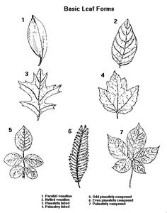 1000+ images about Plant & Tree Identification on