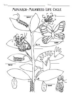 Here's a plant activity guide for grades 3-5 that includes