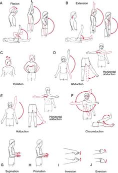 The 11 organ systems of the human body work together to