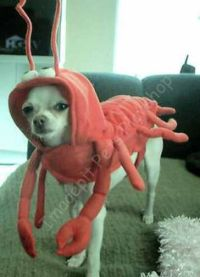 1000+ images about Trick or Treat on Pinterest   Flounder ...