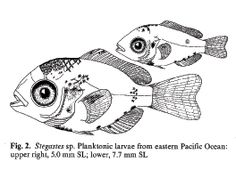 1000+ images about Art Line sea animals on Pinterest