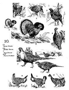 hunt birdz (HuntBirdz) on Pinterest