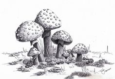1000+ images about Magic Mushrooms on Pinterest