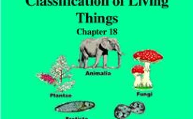 1000 Images About Classification Of Living Things On