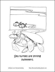Activities for preschoolers, Sea turtles and Turtles on