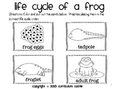 1000+ images about Lifecycles & Baby Animals on Pinterest
