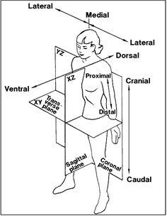 1000+ images about Ergonomic Posture on Pinterest
