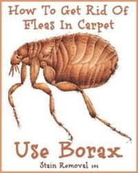 Home Remes For Killing Fleas In Carpet - Carpet Vidalondon