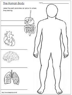 Aparato digestivo, respiratorio y circulatorio