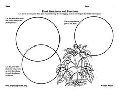 1000+ images about 4th Gr. 1: Plant & Animal Structures