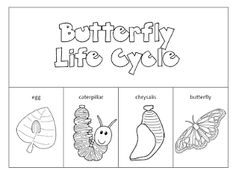 Paper, Vocabulary worksheets and Life cycles on Pinterest