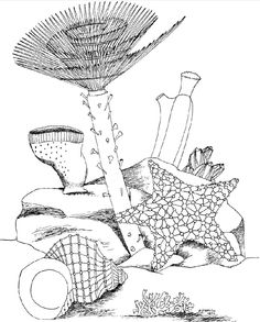 1000+ images about Zentangle underwater on Pinterest