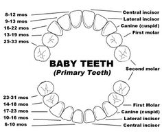 Tooth Numbering Chart for Kids. Created by the amazing