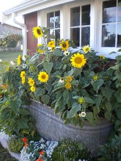 Oliver And Rust Sunflowers Beautiful Way To Keep Them Upright And