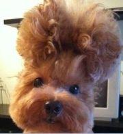 1000 crazy hair animals