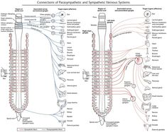 Sensory Dermatome Maps explain some of my daily pain! I've