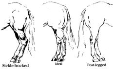 1000+ images about Horse- Conformation on Pinterest