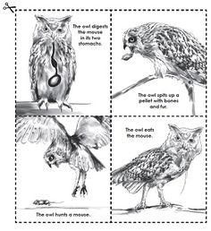 Check out our new Owls and Owl Pellet Worksheets page in